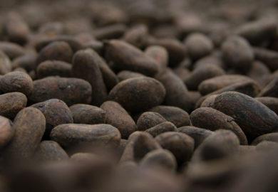El cacao es originario de Honduras